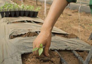Ayudas para 2017 a la instalación de jóvenes agricultores. PDR 2014-2020.