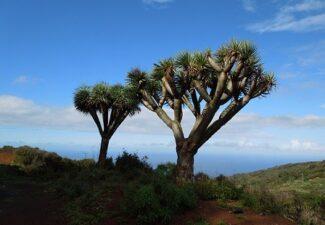Modificaciones en la normativa tributaria de Canarias